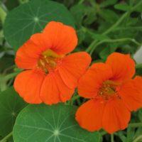 5 fleurs à planter au jardin